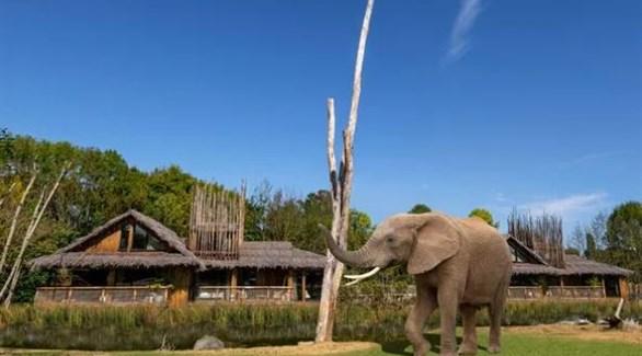 نزل سفاري ببريطانيا لرؤية الأفيال والفهود من داخل غرفة الإقامة